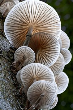 """""""Mushrooms,"""" by The Hot Shots, October, 2012 Mushroom Art, Mushroom Fungi, Wild Mushrooms, Stuffed Mushrooms, Mushroom Pictures, Natural Forms, Natural Texture, Patterns In Nature, Plant Fungus"""
