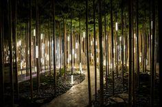 Bamboo Grove installation for Lexus & Sila Sveta