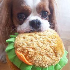 Lola - Got a burger today!