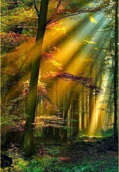 Amazing Photography - Golden Sun Rays, Schwarzwald, Germany
