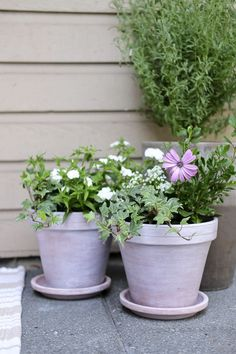 White Washed Pots Turn old terracotta pots into something new with a little white paint and water! White Spray Paint, White Paints, Front Stoop Decor, Outdoor Pots, Outdoor Decor, Old Lanterns, Diy Ottoman, Do It Yourself Projects, Terracotta Pots