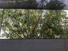 Árvore de longe.