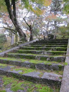 Moss-covered stairway ...