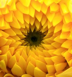 Patterns in Nature : An enigmatic inspiration Posted by Richie, a visit will show you MORE wonders in fractals from nature