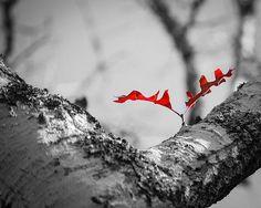 Last leaf on the tree