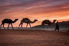 Camel by Okan YILMAZ on 500px