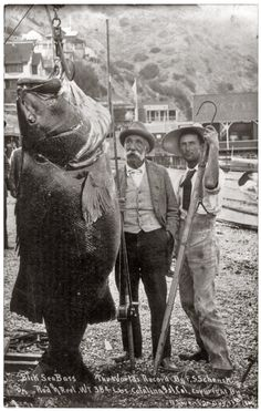 A world's record 384-pound black sea bass caught by Franklin Schenck of Brooklyn with rod and reel off Catalina Island, California, on August 17, 1900.
