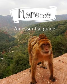 Read this before you travel to Morocco! All the essential travel tips you must know! Travel Essentials, Travel Tips, Visit Morocco, Need To Know, Reading, Movie Posters, Movies, Films, Travel Necessities