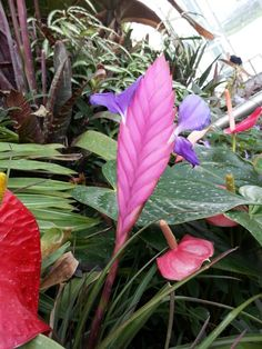 This heliconia is found in Cloud Forest in Gardens by the Bay (Singapore), but I just cannot find its name.