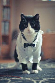 Fancy Cat indeed.
