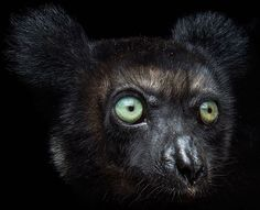 """""""photo by @joelsartore 