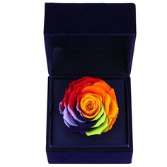 CARVIAN Preserved Fresh Flower Rose Gift Box (Rainbow Rose/Blue Box) ** See this great product.