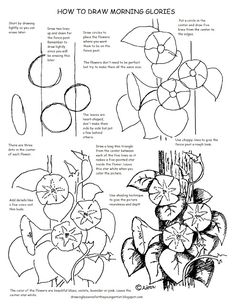 How to Draw Worksheets for The Young Artist: Printable How to Draw Morning…