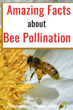 Honey bees are major pollinators of our food crops. Why do we needs bees so badly? #carolinahoneybees