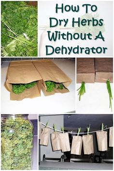 How To Dry Herbs Without A Dehydrator - Chances are if SHTF ans there is no power or you find yourself off the grid for an extend period of time you may need to preserve some herbs to add flavor and to boost your immune system. Here's how to dry herbs without a dehydrator to preserve them for future uses. You can hang dry any herbs that grow on a stem like this.