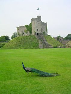 Cardiff Castle by Red Horse, via Flickr  castle keep inside Cardiff castle. so beautiful