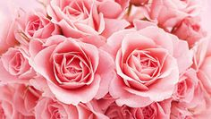 HD Flowers wallpapers - the best high definition Flower wallpapers - page Bunch Of Flowers, Flowers In Hair, Scented Wax, Scented Candles, Long Burning Candles, Bridal Bouquet Fall, Floral Illustrations, Flower Wallpaper, Amazing Flowers