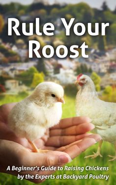guide to raising chickens by the experts at backyard poultry magazine