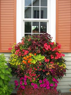 Window box of petunias, coleus, zinnia, geranium, and more.