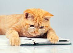 Фотографии обычно получаются вполне удачными, если просто взять кошку крупным планом. Конечно, нужно следить, чтобы не было «обрезанных» ушей, хвостов и лап. Также можно поместить в кадр один-два предмета, например классический клубок ниток или вазу с цветком. Но предметов не должно быть слишком много, чтобы акцент оставался на герое фотосессии.