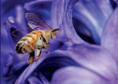 Basics Relating To Bee Venom Therapy For Lyme Disease April 16 2016 at 12:42AM