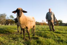 Thinking of Raising Sheep? A lot of things need to be considered before you invest in a sheep enterprise. This fact sheet will help answer some of your questions and help you make a decision.
