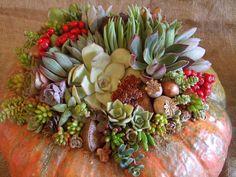Succulent Pumpkin Arrangement  http://waterwisebotanicals.com/