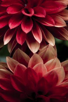 8/9/14: Red Petals by Glenn DiPaola