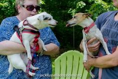 June was a Terrier of a month the featured our annual fundraiser, an awesome adoption and the ongoing circle of life.