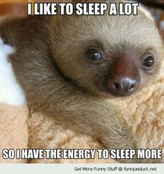 Cute sloth describes me.