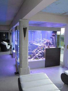 Wielkie akwarium morskie wymaga wiele pracy, żeby utrzymać optymalne warunki życia dla koralowców i ryb. W takim akwarium ważne są dodatkowe akcesoria, które utrzymuja jakość i czystość wody, a także dają optymalne warunki do rozwoju życia. Ważne jest też odpowiednio dobrane oświetlenie - w akwariach morskich dawniej głównie były to lampy HQI lub świetlówki, teraz zastępowane przez lampy LED. Zapraszamy na stronę AQUA-LIGHT.pl - dobór oświetlenia dla każdego akwarium. Polecam ten sklep!
