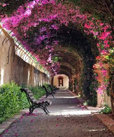 Passage at Jardín de Monforte in Valencia, Spain. Visited to celebrate La Fallas , the annual fiesta in Valencia. Undoubtedly , the most amazing thing i have ever experienced. Beautiful Streets, Beautiful World, Beautiful Gardens, Beautiful Places, Beautiful Flowers, Amazing Places, Nice Flower, Romantic Places, Beautiful Mind