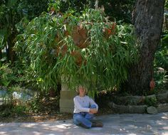 1000 Images About Trees And Plants On Pinterest