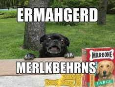 "7 Super Excited ""Ermahgerd"" Animals  The pug is the best. Haven't cracked up in a while"
