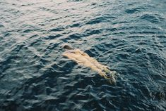 Norway - (c) Mira Wickman, 2019 Filmmaking, Norway, Whale, Nice, Photography, Animals, Cinema, Whales, Photograph