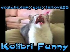 Funny voice cats! Funny Cats Compilation 2014 Funny Cat Compilation, Best Funny Videos, Picture Video, Funny Cats, The Voice, Cool Pictures, Board, Dogs, Youtube