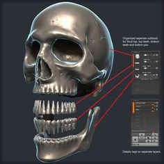 Skull 3D Model Zbrush 3DSmax on CGTrader  http://www.cgtrader.com/3d-models/character-people/anatomy/skull-3d-model--2
