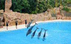 Delfine im Loro Park, Teneriffa © Susanna Wiedermann / Restplatzbörse Hotels, Park, Outdoor Decor, Animals, Viajes, Last Minute Vacation, Teneriffe, Animales, Animaux