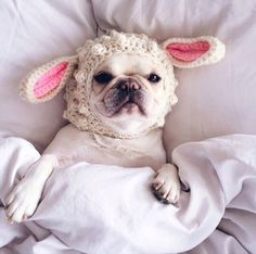 French Bulldog in a Crocheted Bunny Hat.