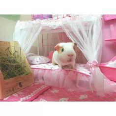 Guinea pig princess cage