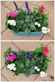 szałwia na balkonie Dream Garden, Home And Garden, Balcony Plants, Perfect Plants, Flowers, Diy, Handmade, Home Decor, Plants