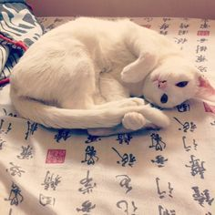 Magical white cat