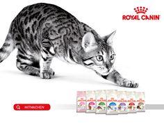 Gewinne mit Royal Canin eine Katzenfutter Jahresration von Royal Canin!  Zusätzlich kannst du gratis Produkte von Royal Canin deiner Wahl testen.  Mach hier gratis im Wettbewerb mit und gewinne: http://www.gratis-schweiz.ch/jetzt-kostenlos-produkt-testen-und-1-jahresration-gewinnen/  Alle Wettbewerbe: http://www.gratis-schweiz.ch/