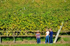 Check out these four kid-friendly Woodinville wineries now