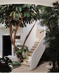 Interior greenery is the beautiful designing that can do in homes,offices,companies etc. Here shows 25 Stylish and Contemporary Interior Greenery Ideas. Outdoor Spaces, Outdoor Living, Outdoor Decor, Indoor Outdoor, Exterior Design, Interior And Exterior, Interior Plants, Garden Design, House Design