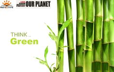 Bamboo is one of the most appreciated textile fibers for our planet.The fabrics are  naturally anti-microbial and highly breathable. The cultivation of Bamboo is highly sustainable from an environmental perspective.