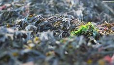 L'ingénieur bretonRémy Lucas a trouvé la solution pour produire un substitut écologique et naturel au plastique. Composé d'algues brunes, ce nouveau matériau est 100 % biodégradable.