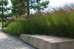 Calamagrostis 'Karl Foerster' and Hemerocallis - love the stone bench and gravel…
