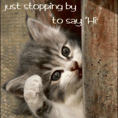Just Saying Hi Quotes - Bing Images Animals And Pets, Funny Animals, Cute Animals, Small Animals, Hi Quotes, Funny Quotes, Just Saying Hi, Network For Good, Gif Animé