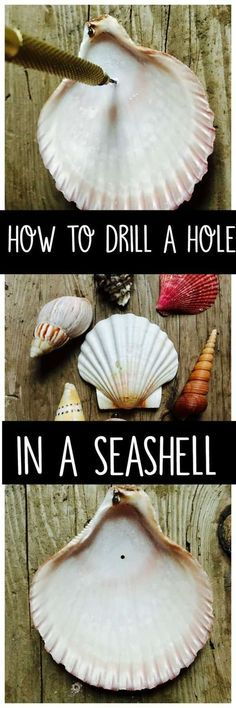 How to drill a hole in a seashell without breaking it. Learn how to drill a hole in a seashell with a simple tool you can purchase from the craft or hardware store. Make crafts or decorations with your shells. Seashell Jewelry, Seashell Art, Seashell Crafts, Beach Crafts, Crafts With Seashells, Seashell Wind Chimes, Seashell Ornaments, Mermaid Crafts, Ocean Crafts